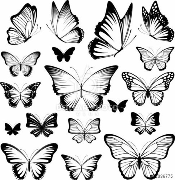 Bangladesh Home Design: Butterfly Tattoo Meaning – Beautiful And Useful