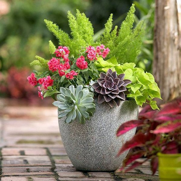 Garden ideas in autumn bring your potted plants indoors interior design ideas avso org - Potted autumn flowers ...