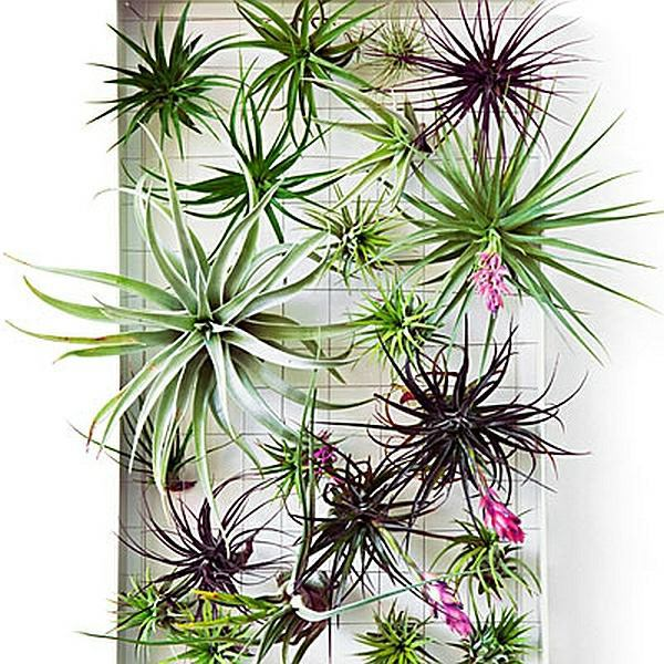 Wall Decor With Exotic Plant Species Diy Interior Design Ideas That Can Be Your Home Look Fantastic