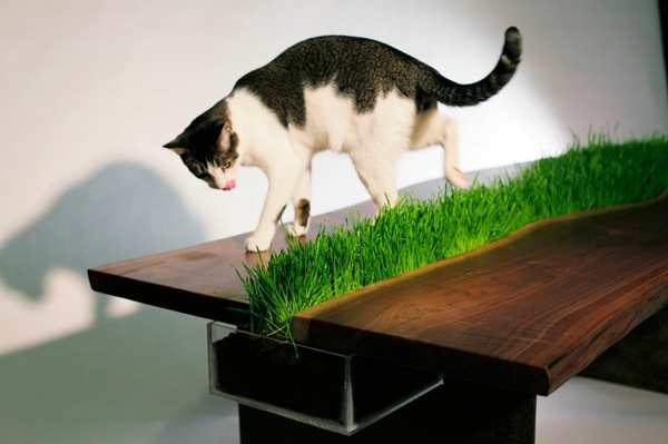 Cat Furniture Design Fun Creative Cats Hide Interior