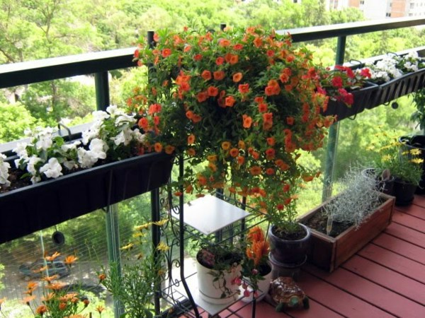 Cool balcony greenery ideas beautify your balcony or for Terrace decoration with plants