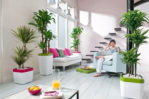 Large Potted Palms Feng Shui Plants For Harmony And Positive Energy In The Living Room