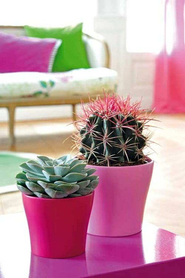 Cactus And Succulents Feng Shui Plants For Harmony Positive Energy In The Living Room