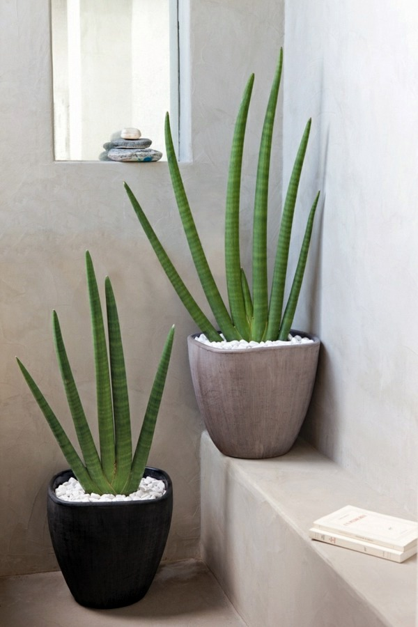 Feng shui plants for harmony and positive energy in the - Plantes pour salle de bain ...