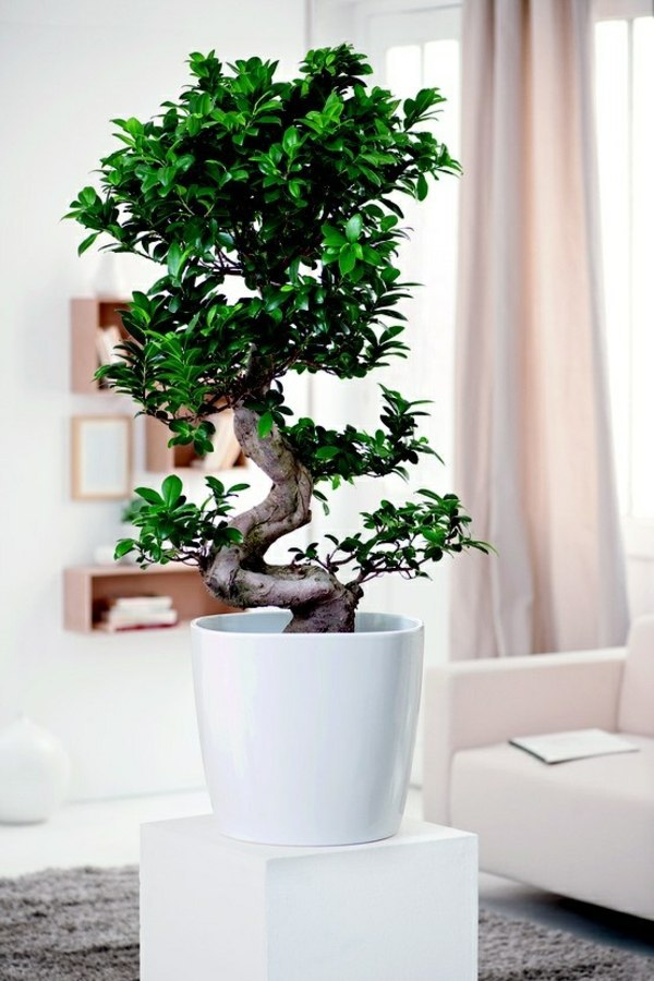 Feng shui plants for harmony and positive energy in the for Room decor ideas with plants