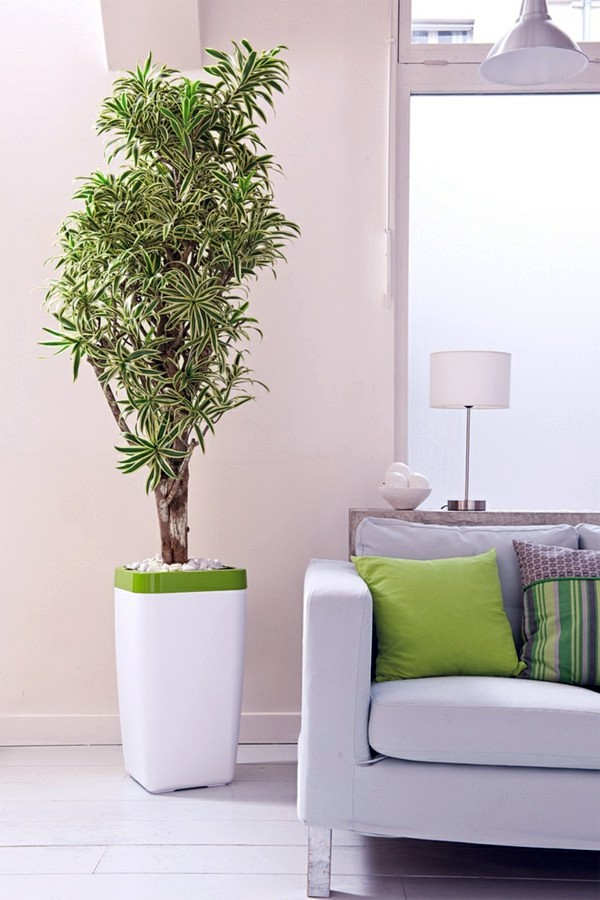 Feng shui plants for harmony and positive energy in the - Plant decoration in living room ...