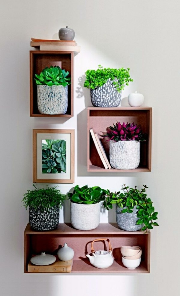 Feng shui plants for harmony and positive energy in the for Living room ideas plants