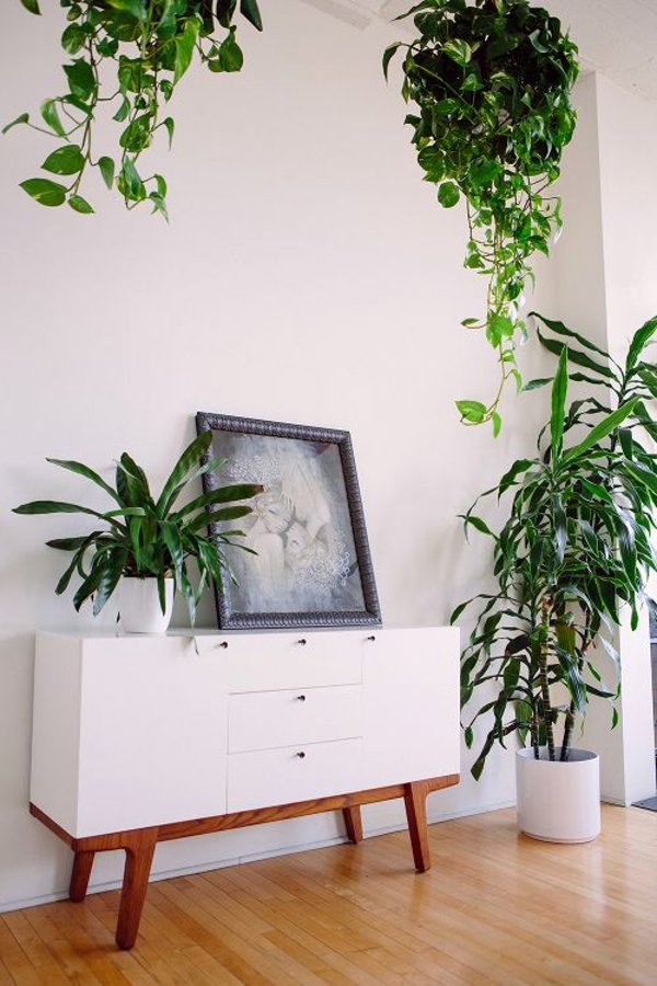 ... Feng Shui Plants For Harmony And Positive Energy In The Living Room Part 48