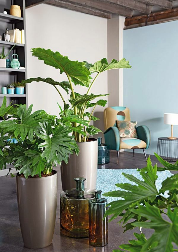 Harmonious Atmosphere Feng Shui Plants For Harmony And Positive Energy In The Living Room