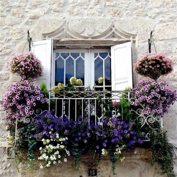 Choose Flowers For Balcony And