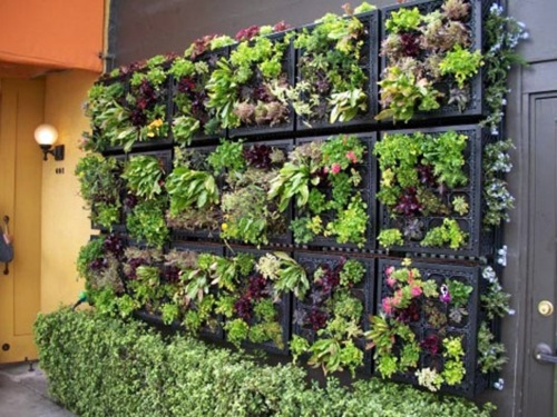 Elegant Wall Decoration And Practical Flowers Balcony Plants
