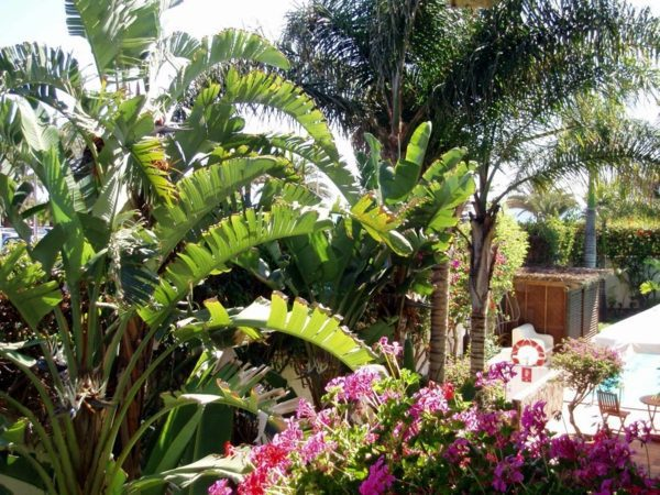 Create Tropical Mood With The Right Palm In The Garden