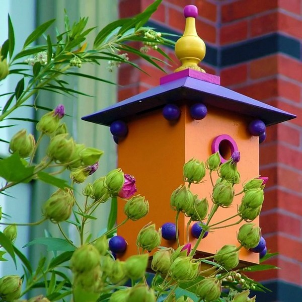 Pictures of bird houses to color