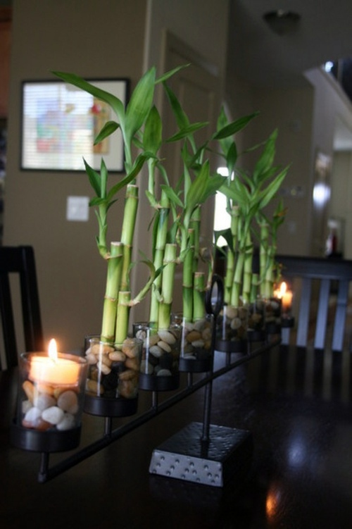 easy bamboo interior decoration. The easy care lucky bamboo decoration  Enhance your style with the