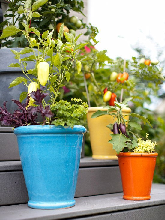 20 interesting fresh ideas for growing vegetables in for Ideas for growing vegetables