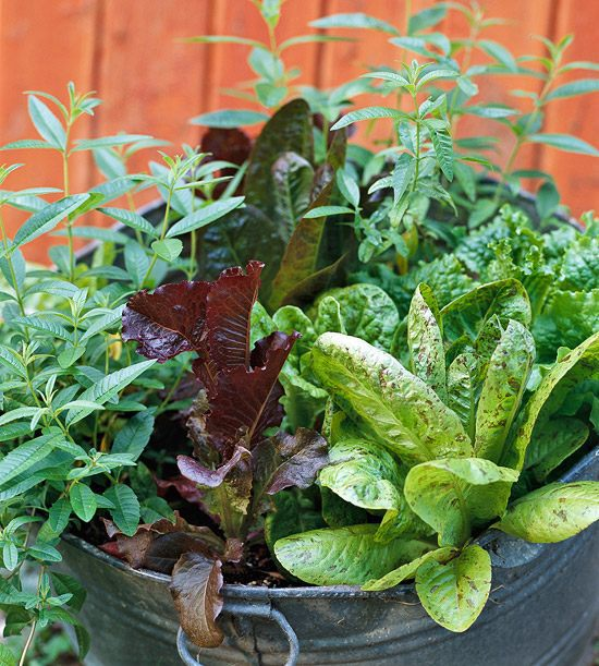 20 Interesting, Fresh Ideas For Growing Vegetables In