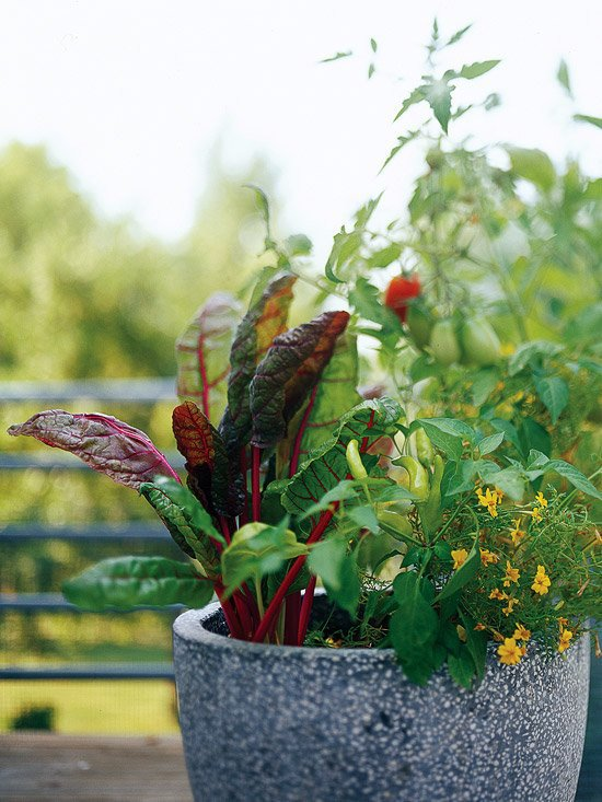 20 interesting, fresh ideas for growing vegetables in contai.