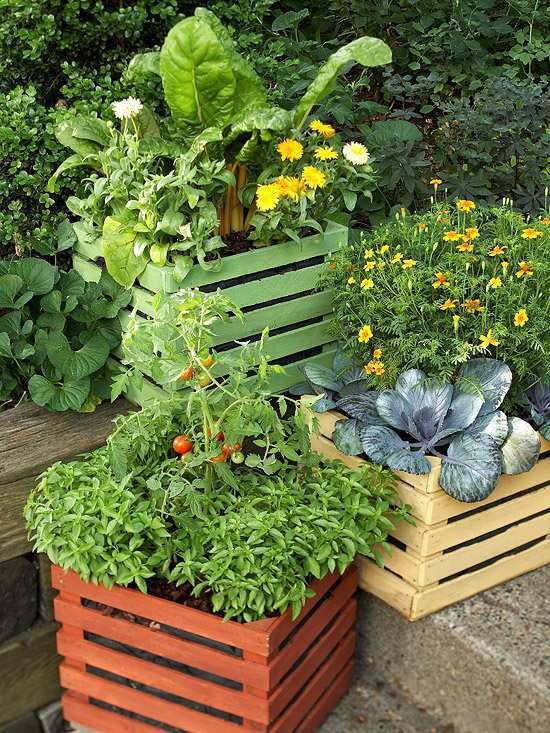 20 interesting fresh ideas for growing vegetables in containers interior design ideas avso org - Containers for vegetable gardening ...