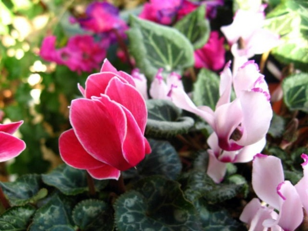Green House Plants Flowering Easy Care Potted Plants