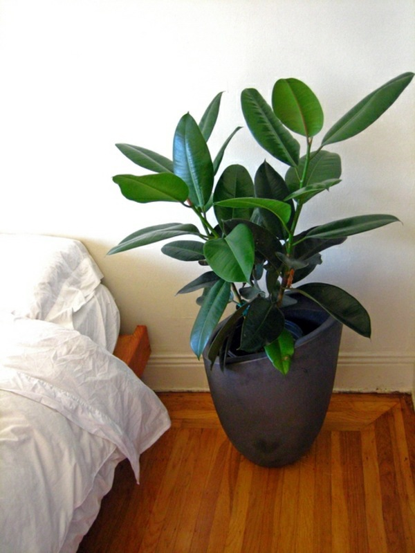 Green house plants flowering easy care potted plants interior design ideas avso org - Easy to take care of indoor plants ...