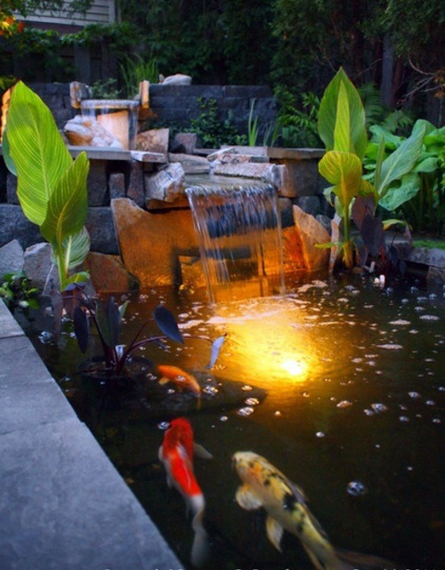 Creating a koi pond in the garden typical extra for the for Koi pond plant ideas