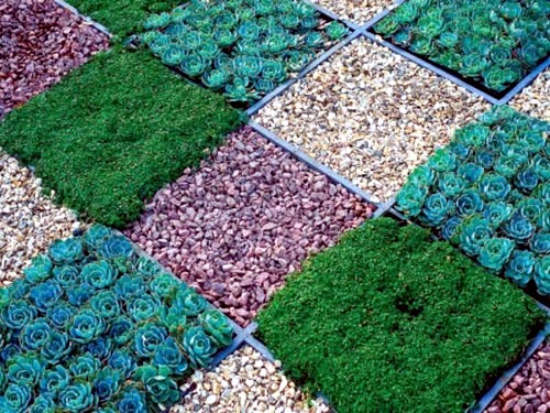 Shaped Succulent Grass And Pebbles On The Squares Front Garden Design With Gravel You Want To