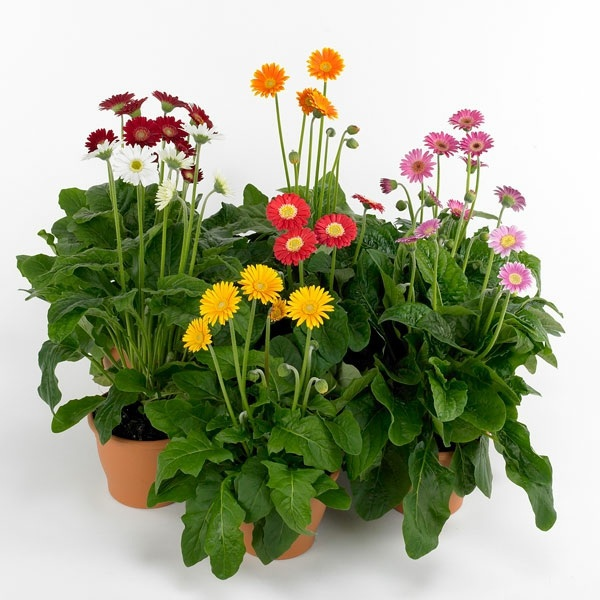 Pot Flower Garden Houseplants That Need Little Light