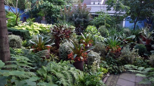 Make shade garden with tropical plants interior design ideas avso org - Indoor plants for shade ...