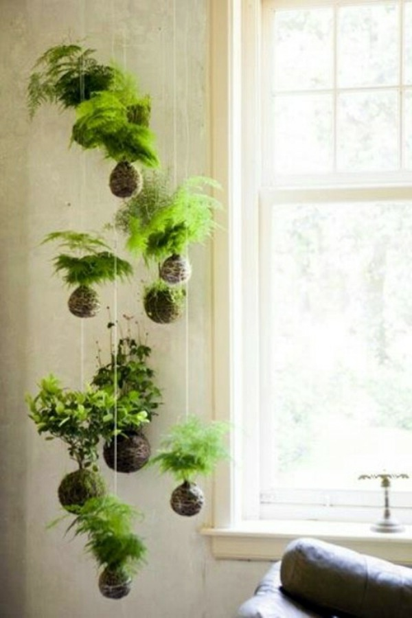 Hanging indoor plants and patio plants hanging plants for Zimmerpflanzen dekorieren