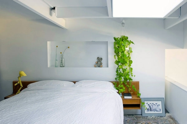 ... Hanging Indoor Plants And Patio Plants   Hanging Plants For The Purpose  Of Green House