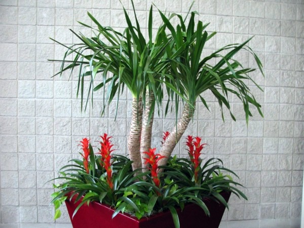 Indoor Palm Images Which Are The Typical Types Of Palm