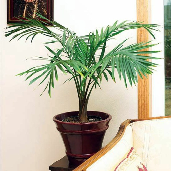 ... Indoor Palm Images   Which Are The Typical Types Of Palm Trees? Part 94