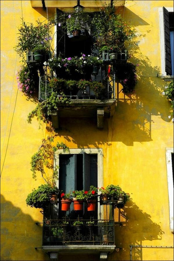 Cool Ideas For Balcony Plants Practical Advice To Make A