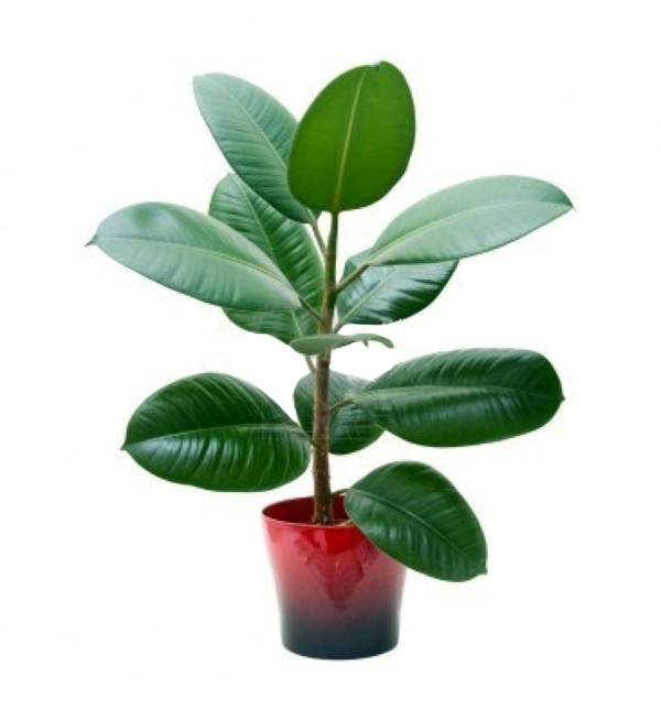 Sturdy houseplants popular easy care potted plants interior design ideas avso org - Easy maintenance indoor plants ...