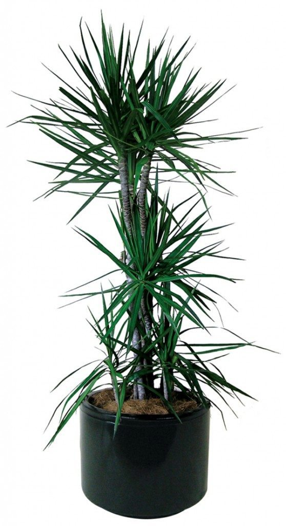 Sturdy houseplants popular easy care potted plants for Easy to care for outdoor flowering plants