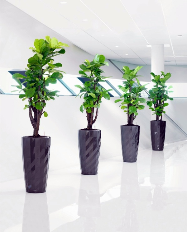 Sturdy houseplants popular easy care potted plants for Easy to take care of indoor plants