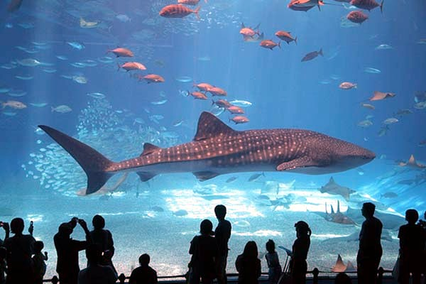 Top 5: The most amazing giant aquariums in the world ...