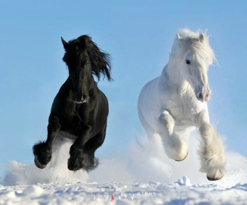 13 beautiful horses in the wild nature | Interior Design Ideas | AVSO ...