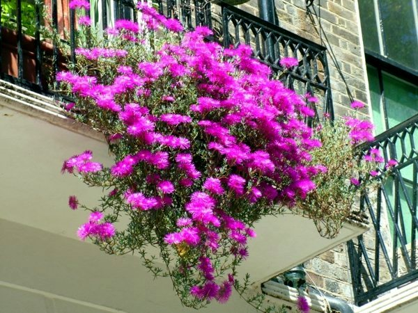Flowers and plants for the balcony create gorgeous - Hanging plants in balcony ...