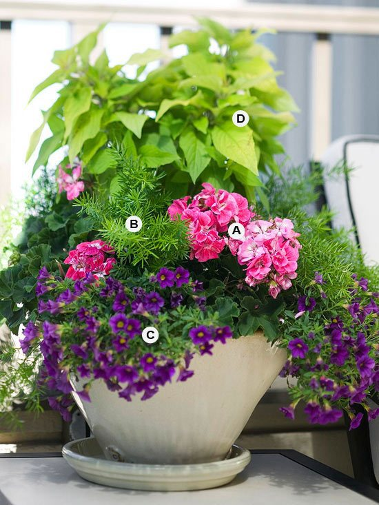 Perfect Flower Containers For Your Geraniums Landscaping
