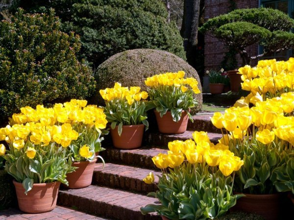 light the way gartengestaltung landscaping ideas with spring flowers the beauty of tulips - Spring Planting Ideas