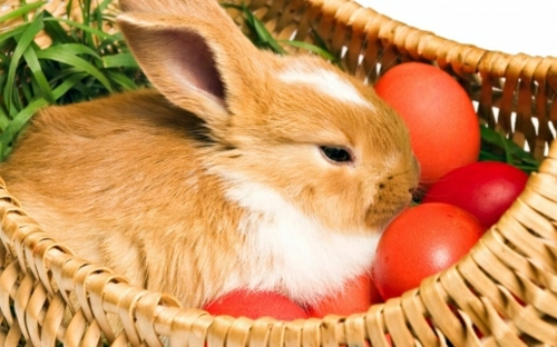 The Legend Of The Easter Bunny Where Does The Easter Bunny