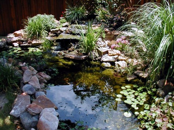 Creating a beautiful garden pond create a water garden for Creating a pond