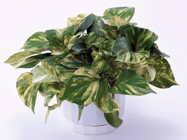pleasurable low maintenance house plants. Einrichtungsideen Fresh easy to care for houseplants that improve the  interior pleasurable low maintenance The Best 100 Pleasurable Low Maintenance House Plants Image