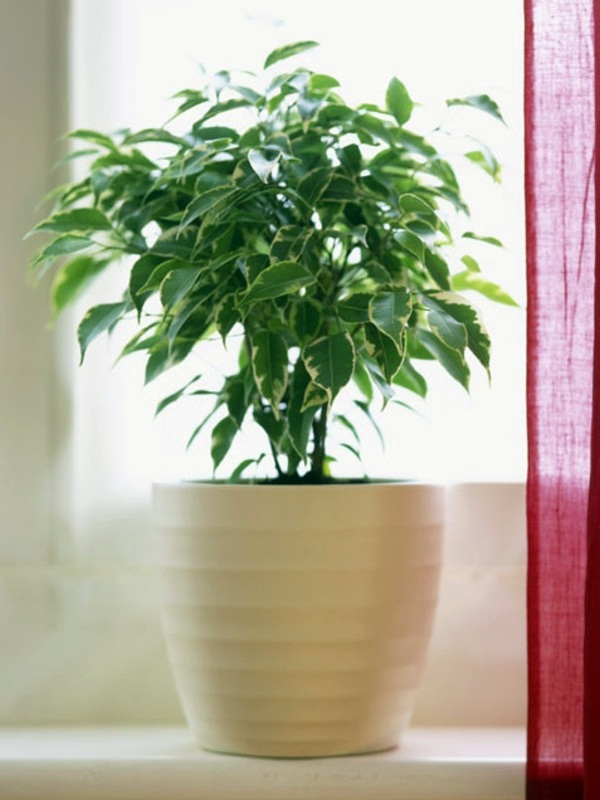 Fresh easy to care for houseplants that improve the for Easy to take care of houseplants