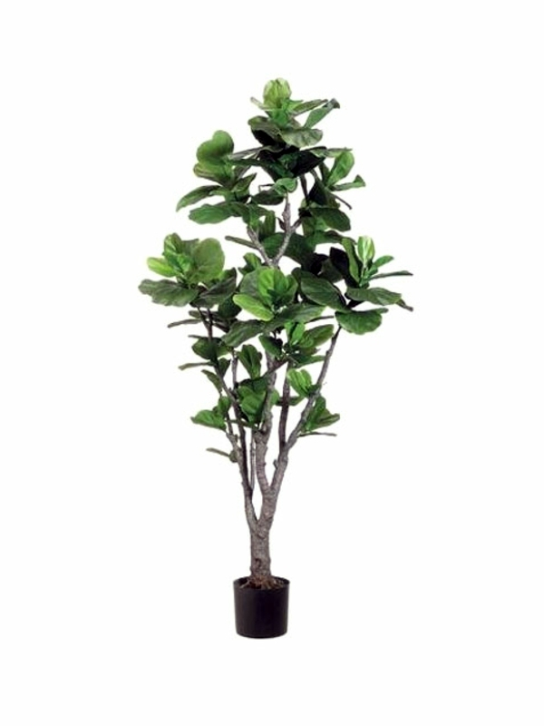 fresh easy to care for houseplants that improve the interior tall indoor plants low light - Tall House Plants Low Light