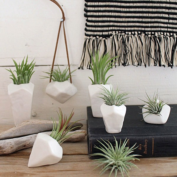 Plant care air plants as a great decoration interior for Air plant decoration