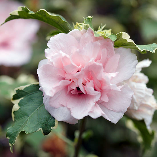 The Most Beautiful Pink Flowers In Garden Grow Landscaping