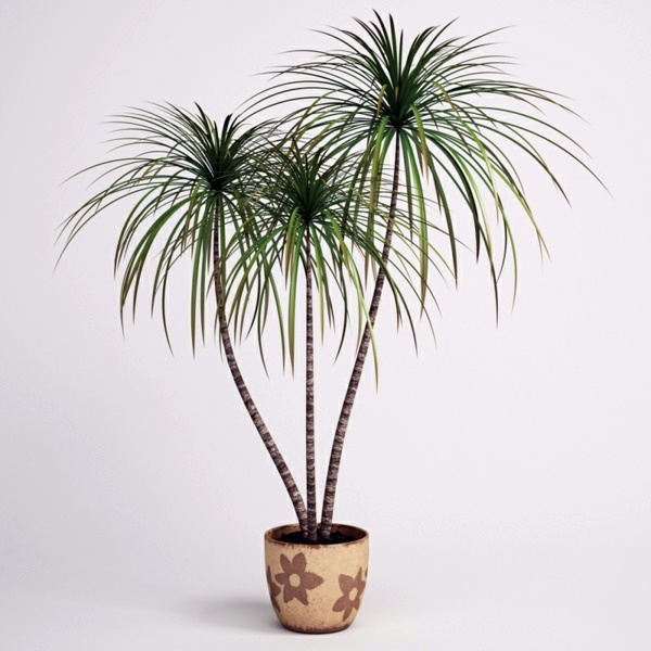 Best Indoor Plants For Dark Rooms