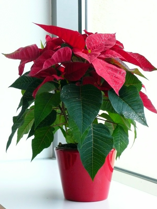 Decorative Indoor Plants Easy Care Potted Plants